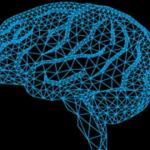 La Geometría del Entorno cambia la Geometría del Cerebro