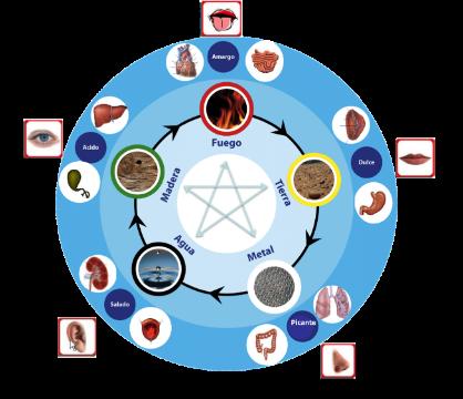 5 elementos y cuerpo humano
