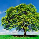 Que significa sustentabilidad?