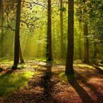 Somos, luz, forma y vibración